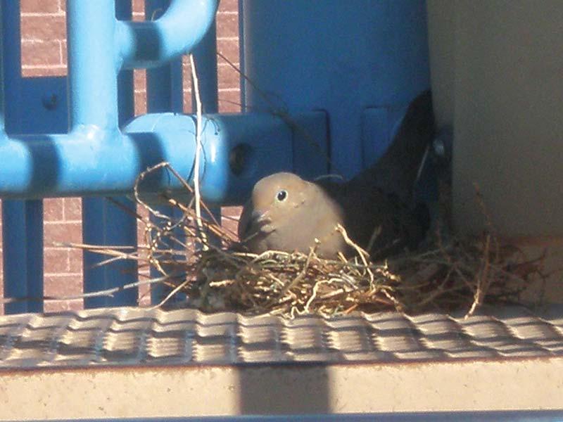 Bird in nest on playground
