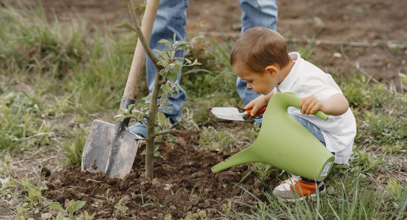 young child planting a tree