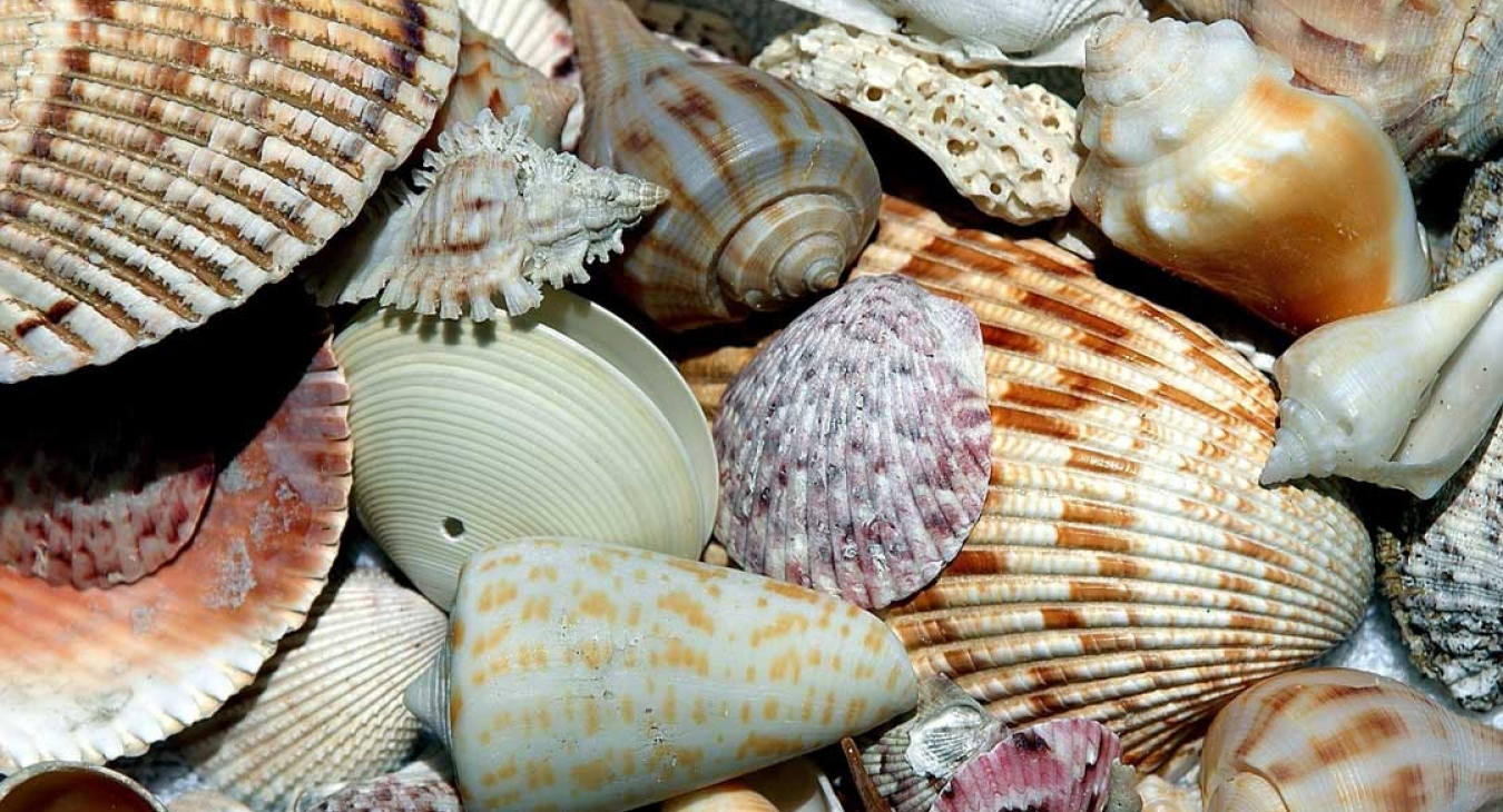 5 Tips for Collecting Seashells
