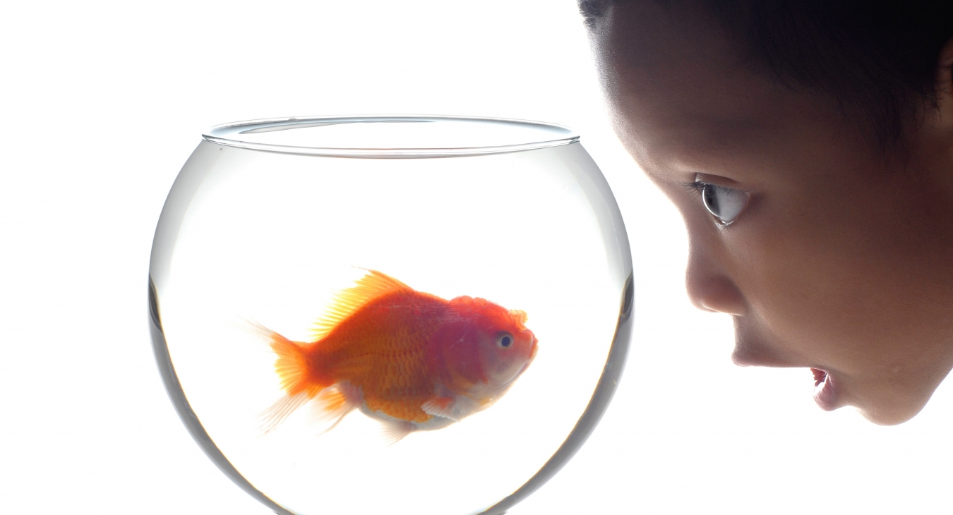 kid looking at a goldfish in a fishbowl