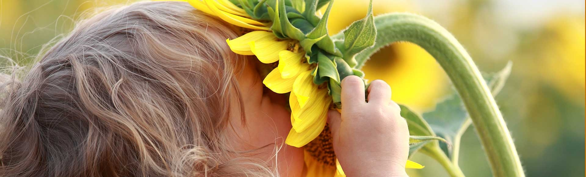 child smelling sunflower outside